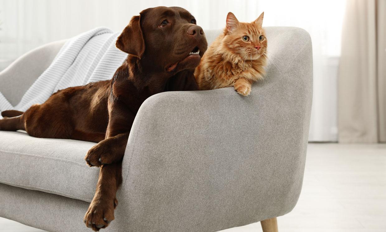Este es el riesgo que corres si no desparasitas bien a tu mascota