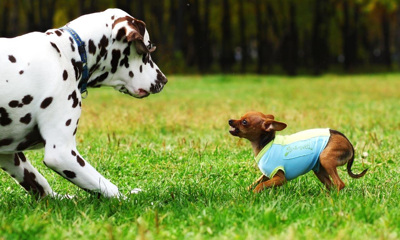 Estas son las razones por las que tu perro se lleva mal con otros perros