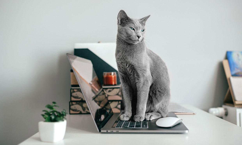 Esto es lo que dicen los gestos y sonidos de tu gato