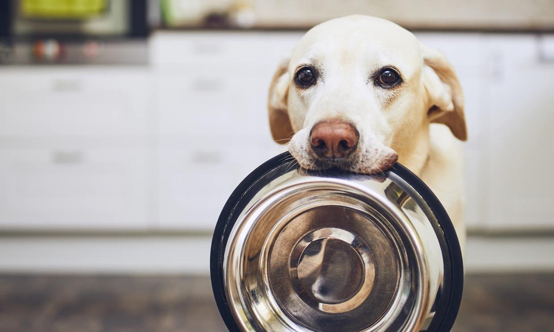 ¿Por qué mi perro siempre tiene hambre?