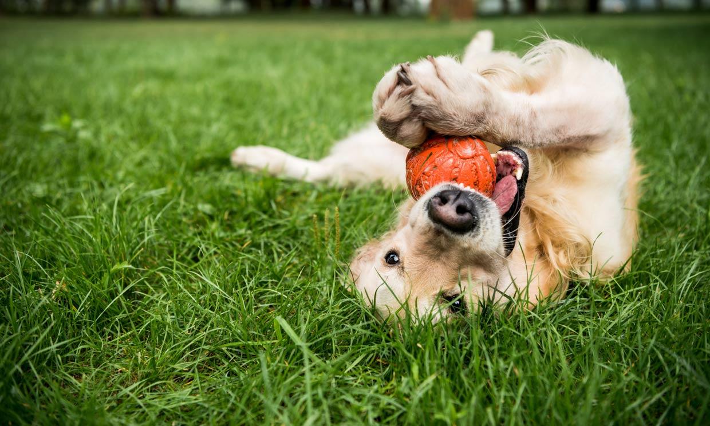 ¡No paran! 7 razas de perro muy juguetonas