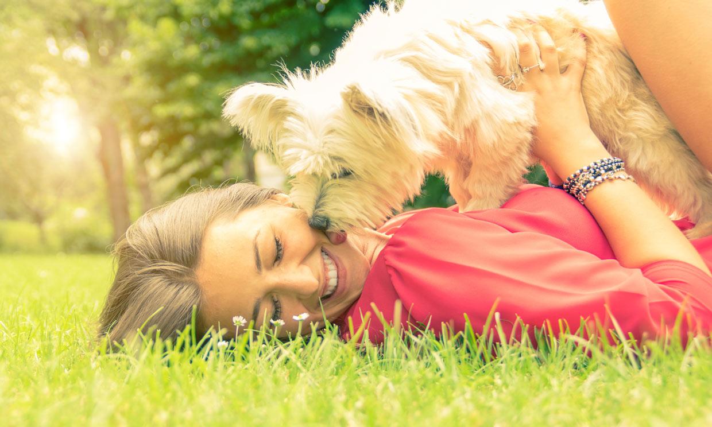¿Por qué me monta mi perro o monta a otros perros?