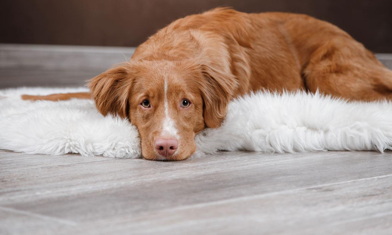 Presta atención a estos comportamientos de tu perro: ¿debes preocuparte?