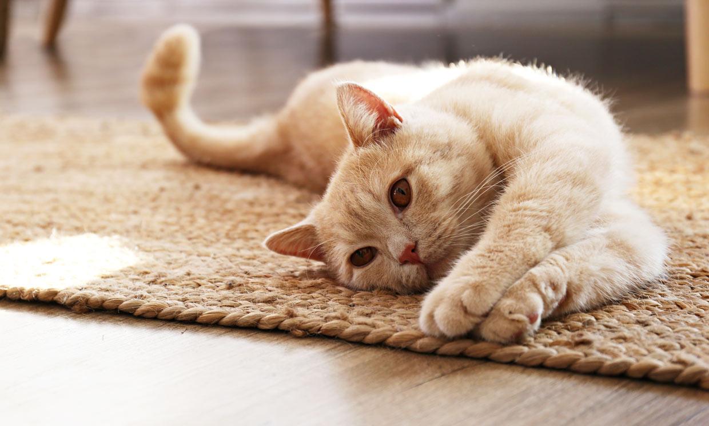 Consejos útiles si tu gato tiene artrosis