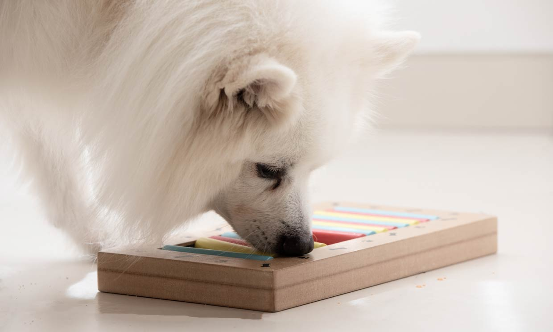 Test de inteligencia para perros: averigua si tu perro es 'superdotado'
