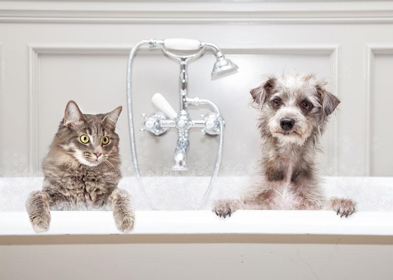 gato y perro en la bañera