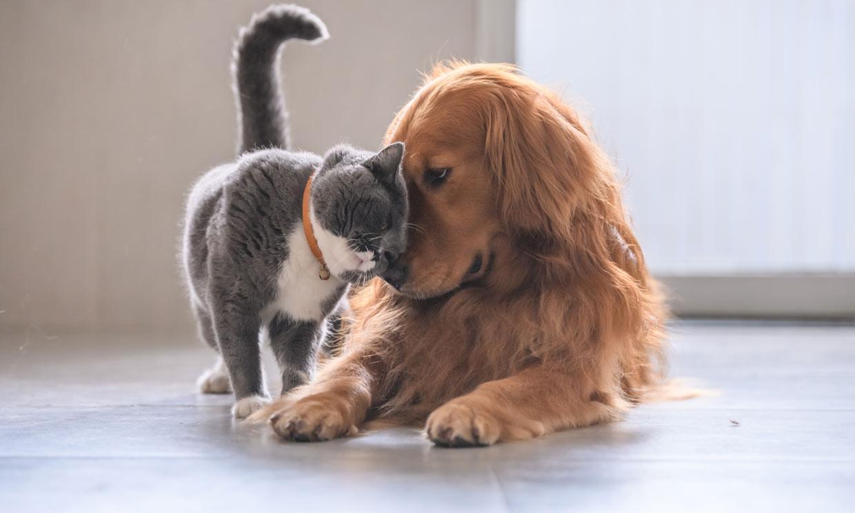 Perros y gatos felices: esto es lo que tus mascotas necesitan para sentirse bien