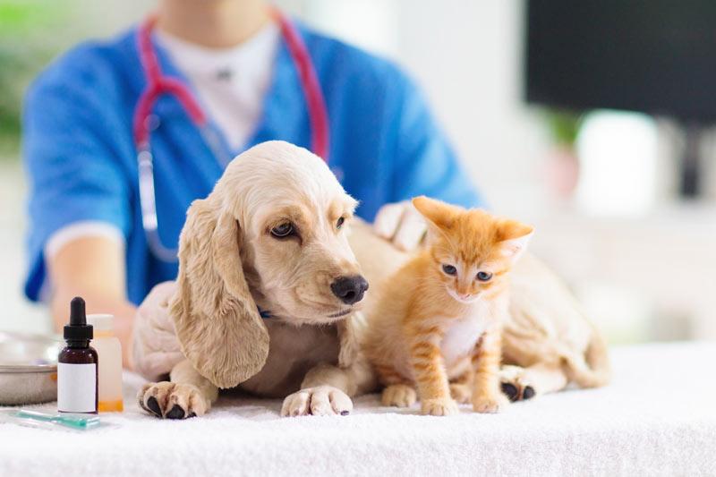 gato y perro en el veterinario