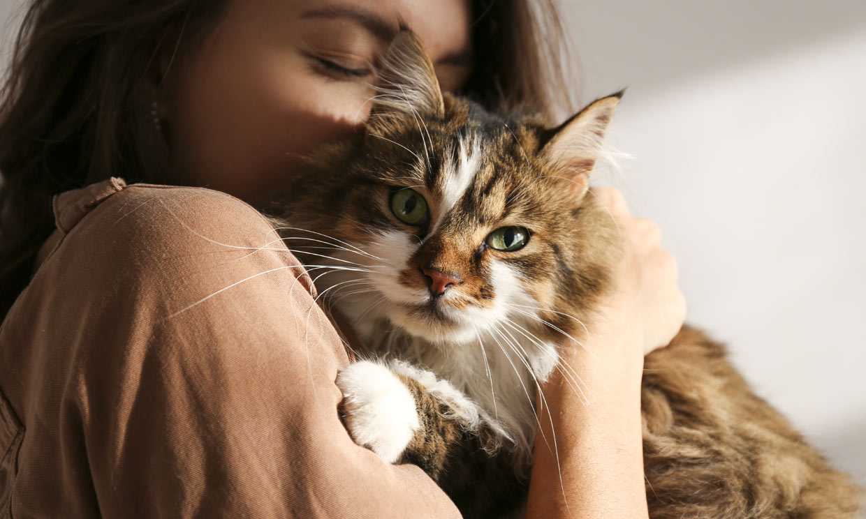 Estas son las razones por las que tu gato no ronronea