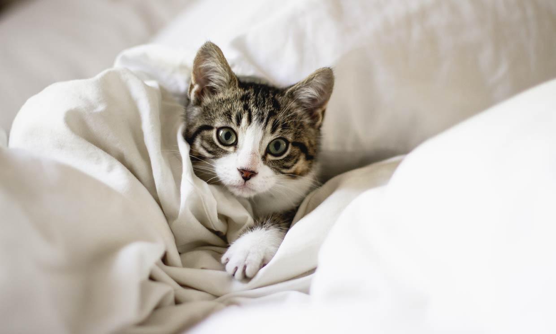 Cómo educar a un gato callejero