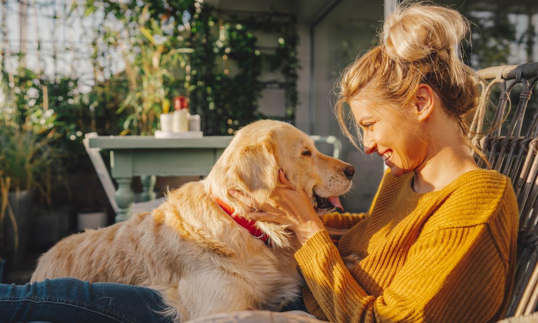 ¿Sabes qué siente tu perro cuando le acaricias?