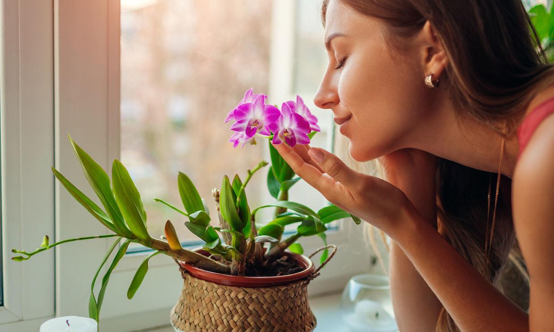El poder de las flores para aliviar el estrés, la ansiedad y la tristeza