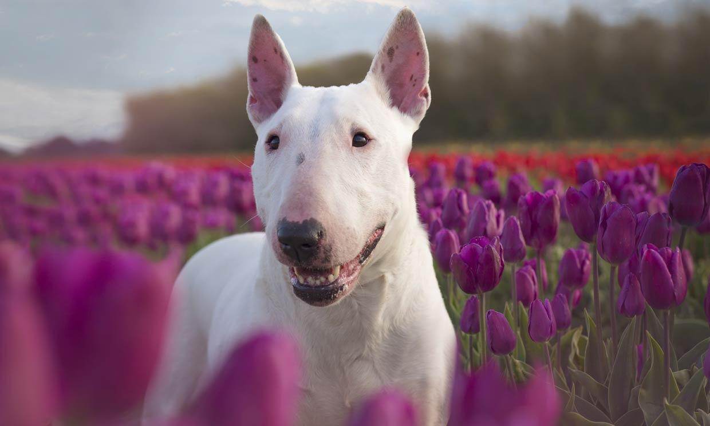Estas son las 16 razas de perro potencialmente peligrosos que se benefician de la nueva ley