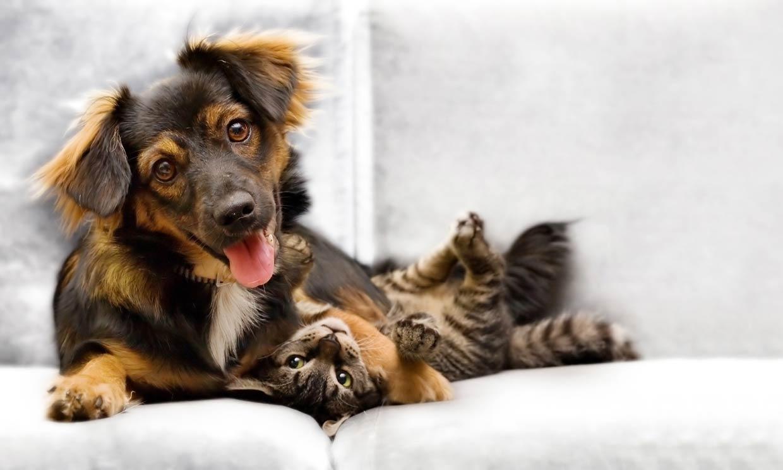 ¿Sabes qué siente tu perro o tu gato tras la castración?