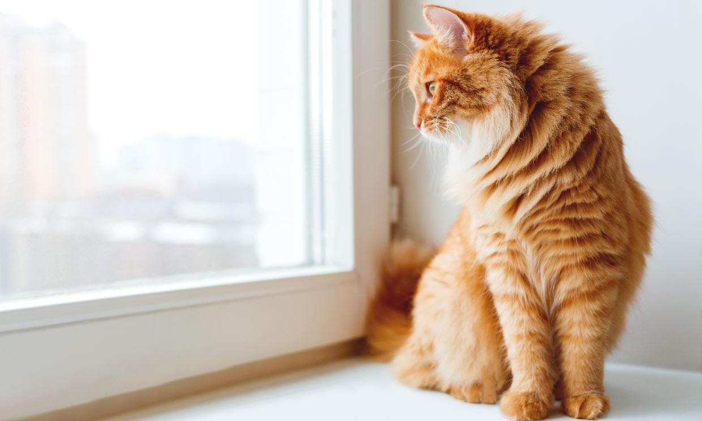 ¿Has oído hablar del síndrome del gato paracaidista?