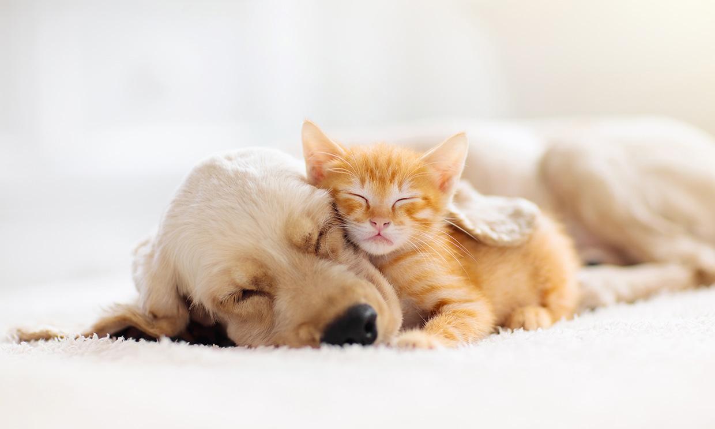¿Eres de perros o de gatos? Descubre cuál es la mascota que mejor encaja contigo