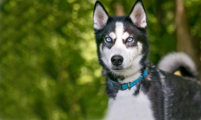 ¿Es mejor elegir un collar o un arnés para nuestro perro?