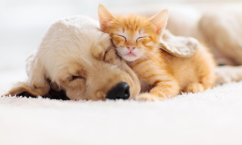 ¿Tienes ya un gato en casa y quieres una nueva mascota? Apunta estos consejos