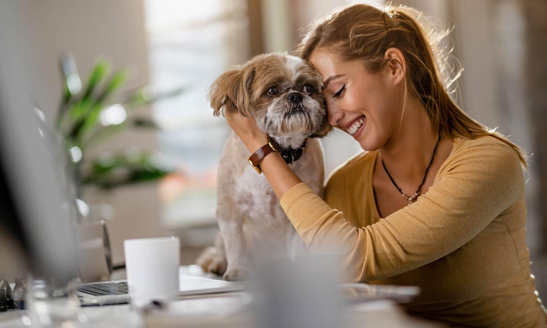 Los 5 beneficios de llevar a tu perro a la oficina