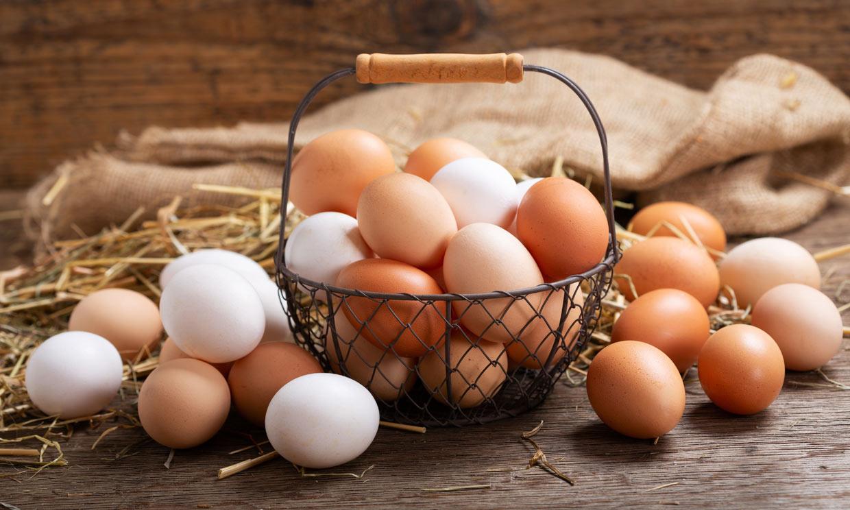 Consejos para prevenir una intoxicación alimentaria por salmonelosis