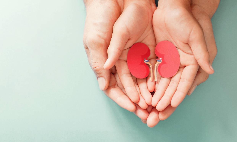 Consejos útiles para cuidar la salud de tus riñones