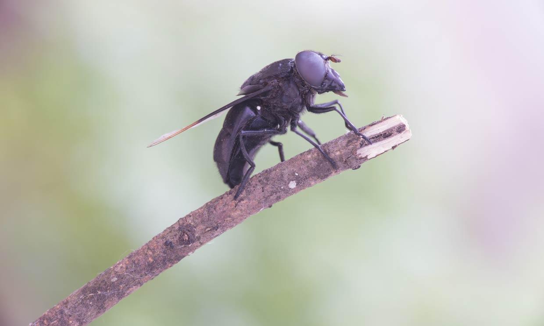 Cómo evitar la temida mordedura de la mosca negra
