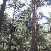 Disfruta con tus hijos de un día de aventura entre árboles