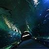 Noches entre tiburones, 'cumples' con dinosaurios... ¿conoces L'Oceanogràfic?