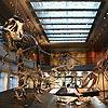 ¿Cuáles son los mejores sitios del mundo para ver dinosaurios?