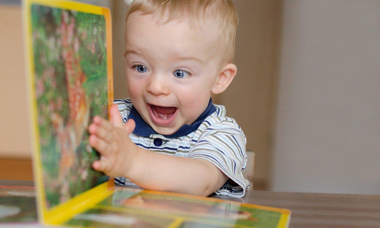Libros y juegos para conocer el mundo animal desde casa