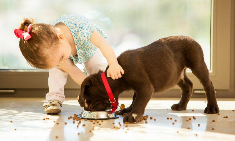 ¿Sabes que las mascotas pueden ayudar a la salud emocional de los niños?