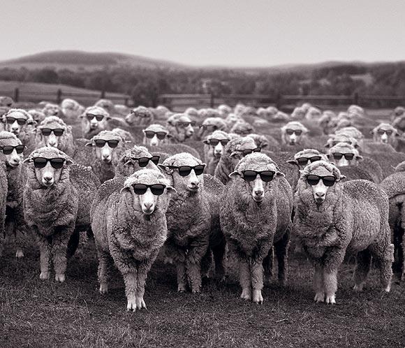 'La semana de la lana' regresa a las calles de Madrid por segundo año consecutivo