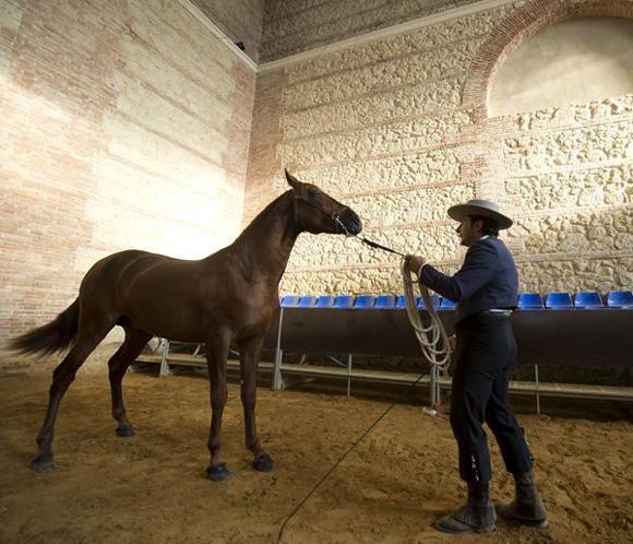 El caballo de pura raza español vuelve a su origen, Córdoba