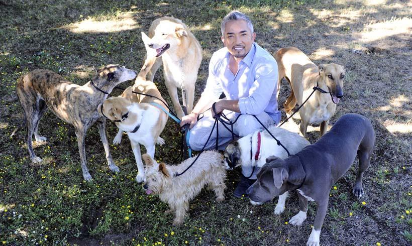 Los perros de César Millán evitan un robo en su casa