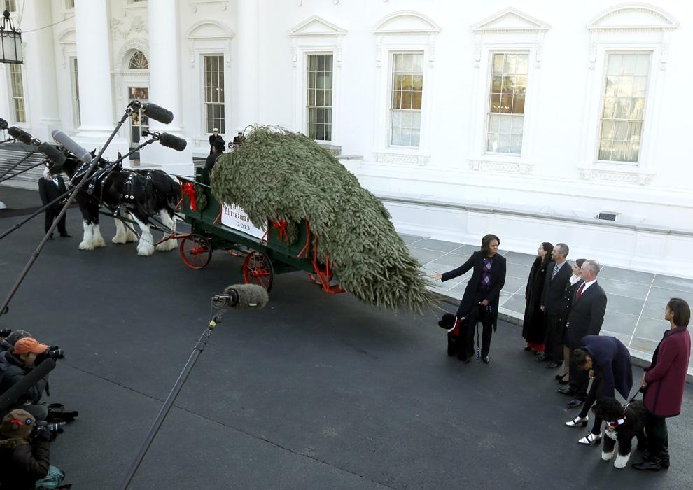 En la Casa Blanca ya es Navidad. El presidente Obama, su esposa y sus dos hijas recibieron el gran árbol que adornará el Salón Azul de la Casa Blanca durante estas fechas. Mide de 5,6 metros y proviene de la ya tradicional granja Crystal Spring Tree de Lehighton, Pensilvania.