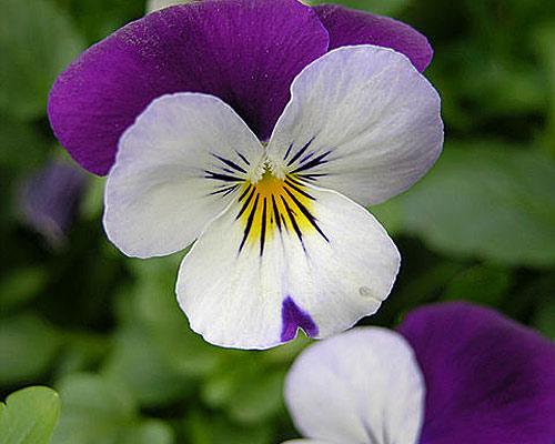 Imagenes de flores mas bonitas imagui - Flores mas bonitas ...