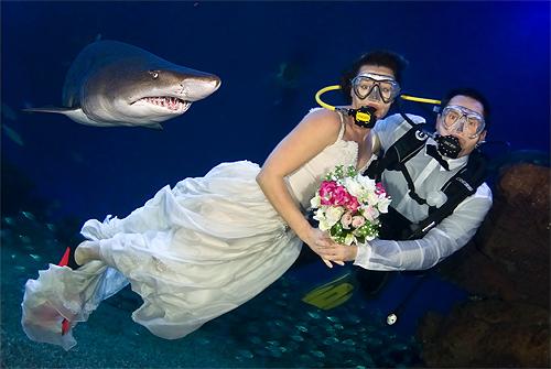 Ideas originales para bodas da el 39 s quiero 39 entre tiburones for Hoteles mas lujosos del mundo bajo el mar