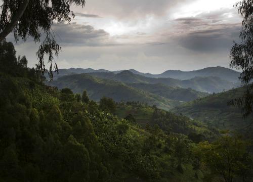 Gorilas, volcanes y paraísos naturales: Descubre Ruanda en tu luna de miel