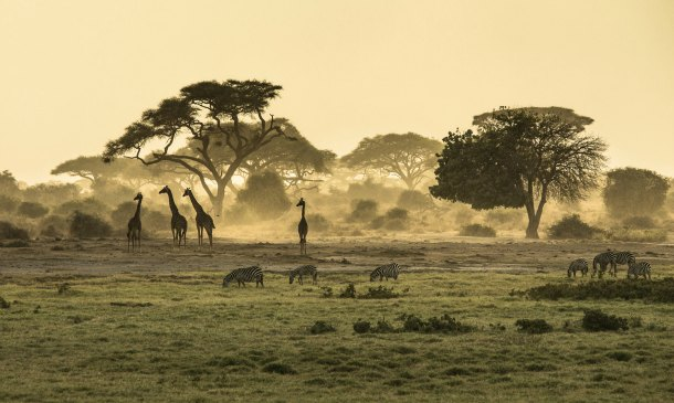 Memorias de África para 'honeymooners'