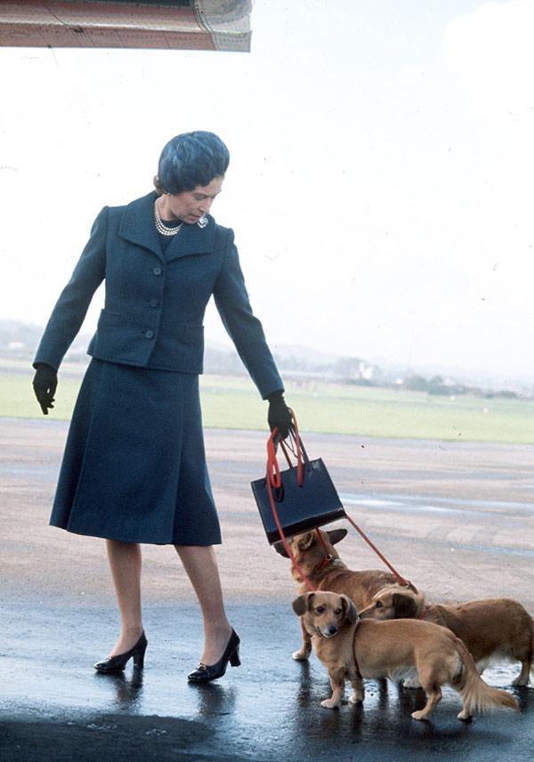 La reina Isabel II renuncia a seguir criando perros Corgi, sus ...