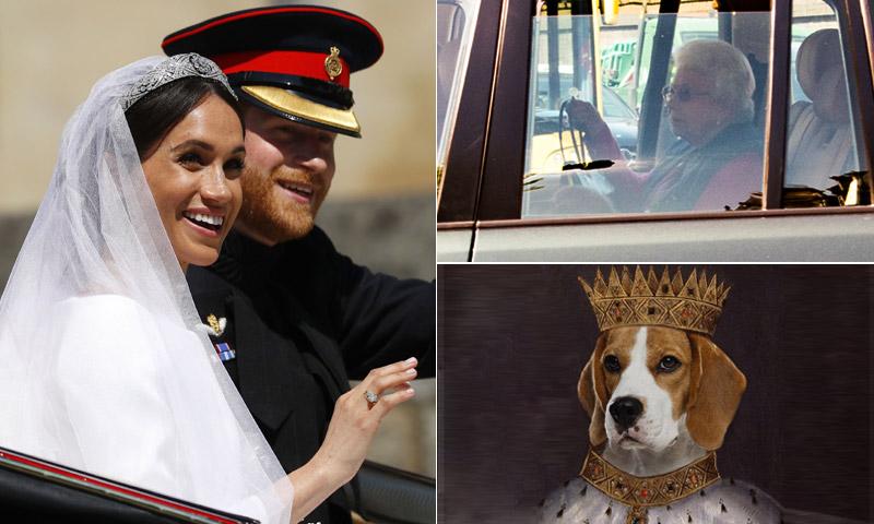 De perro de refugio a alteza canina: la mascota de Meghan desata su propio fenómeno
