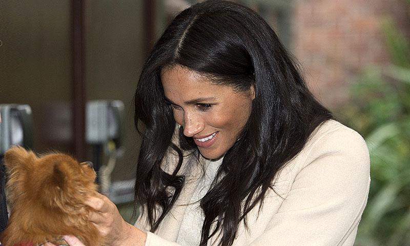 ¡Sin poder parar de acariciarlos! Meghan deja de lado el protocolo y evidencia su amor por los perros