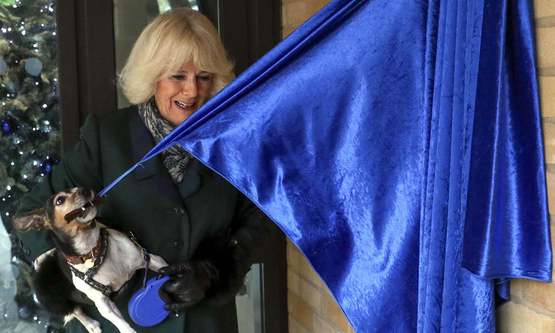 'Su Alteza Real' Beth, la mascota de la duquesa de Cornualles descubre una placa (y no es ficción)