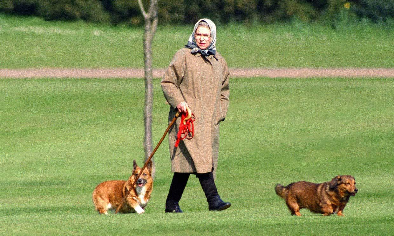 El último disgusto de Isabel II al fallecer Fergus, el cachorro que la acompañó en su soledad