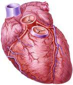 Trombosis coronaria