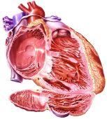 Enfermedad de la válvula cardiaca