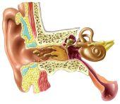 Otalgia (dolor de oídos)