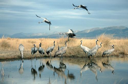 'Birdwatching', abre los ojos
