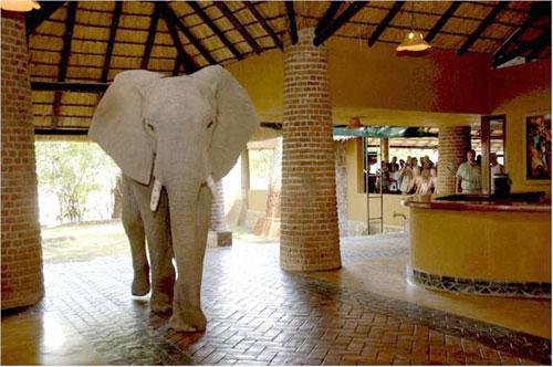 Un elefante en tu habitación