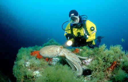 Bucea en las islas Medes entre corales y peces de colores